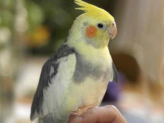Из автомата достали пьяного попугая