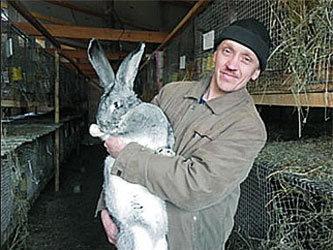 Кролики как бизнес в домашних условиях
