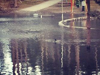 На затопленной детской площадке в Тимирязевском сквере поселились утки