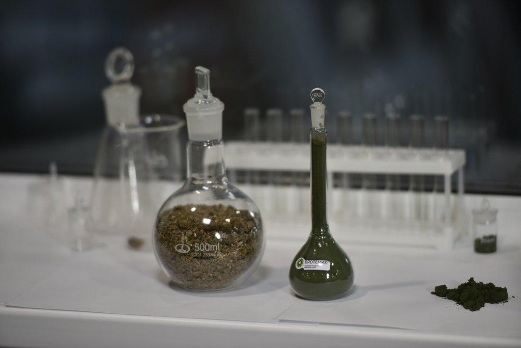 Протеин будущего начали производить в Горном Алтае