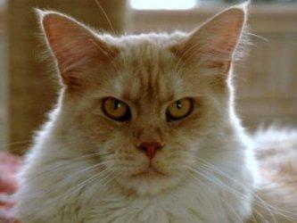 Суровый русский кот поразил пользователей YouTube