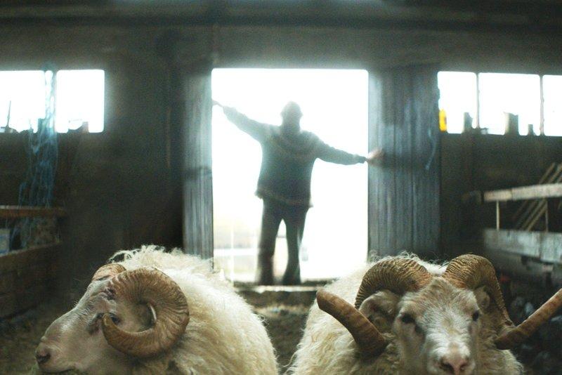 Кино Исландии впервые выйдет на экраны Новосибирска