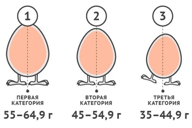 Что надо знать о «магазинных» яйцах. ИНФОГРАФИКА