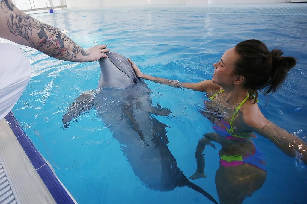 Подарки плавание с дельфинами 393