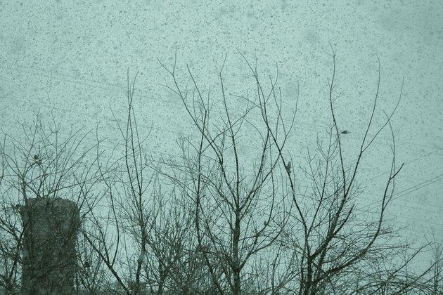 Синоптики прогнозируют теплые весну илето вряде регионов Западной Сибири