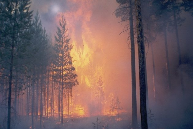 Площадь лесных пожаров вЗабайкалье значительно увеличилась