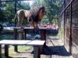 Владельцы «звериных» фамилий попадут в зоопарк Барнаула бесплатно