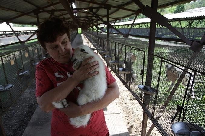 Всевозможные животные могут быть одомашнены— Ученые