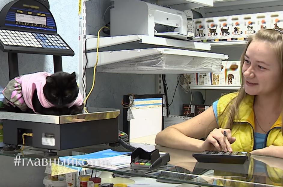 Кошка-фармацевт с Алтая попала в шоу Шнурова