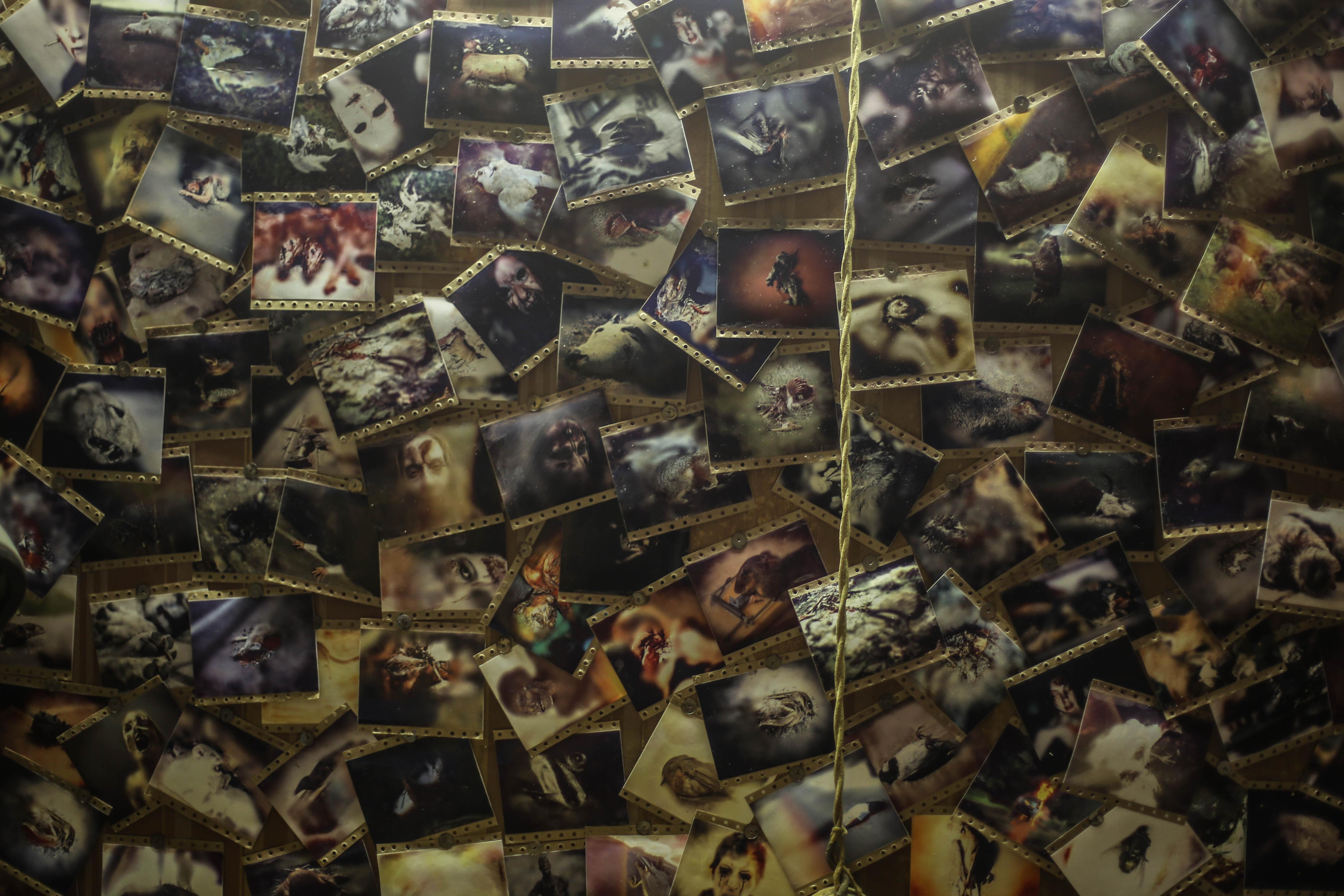 Хоррор «Фото на память» напугает зрителей кино