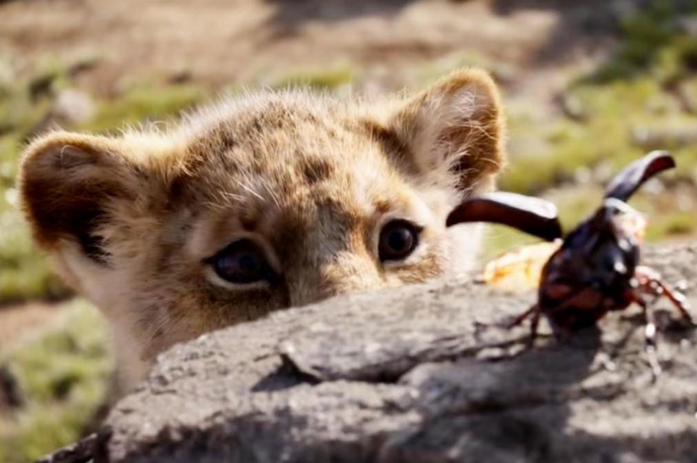 «Король Лев»: зверята учатся рычать